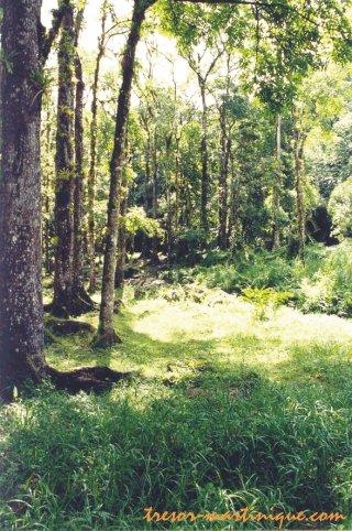 Saint-joseph : balade dans la forêt en martinique